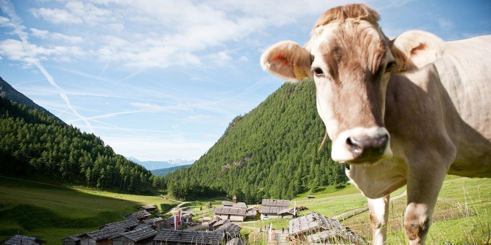 Zwischen Milchfest und Hochgebirgswanderung