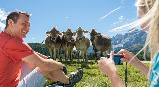 L'ebbrezza dell'Alpe